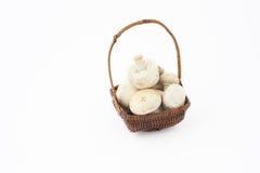 Korb mit Pilzen Lizenzfreie Stockbilder
