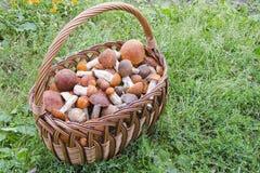 Korb mit Pilzen auf dem Gras Lizenzfreie Stockfotos