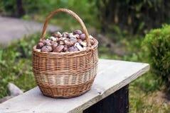 Korb mit Pilzen auf einer Holzbank Stockbild