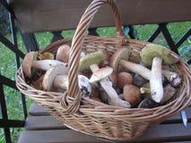 Korb mit Pilzen im countri lizenzfreies stockfoto