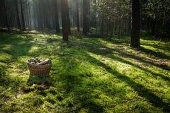 Korb mit Pilzen im Wald Lizenzfreies Stockfoto