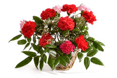 Korb mit roten Gartennelken Lizenzfreie Stockbilder