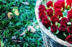 Korb mit roten Rosen auf einem Grashintergrund Fokus auf Rosen Lizenzfreie Stockfotografie