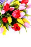 Korb voll der Tulpen stockfoto