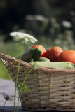 Korb voll des Gemüses Stockbild