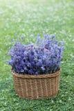 Korb voll des Lavendels Stockfotos