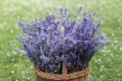 Korb voll des Lavendels Stockbild