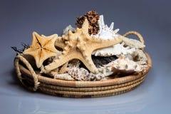 Korb voll von angefüllten Meerestieren Stockfotos