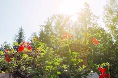 Korb voll von Blumen gegen Sonnenlicht stockfotos