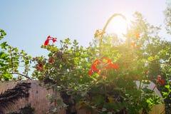 Korb voll von Blumen gegen Sonnenlicht stockfoto