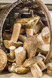 Korb voll von Pilzen auf einer Tabelle Stockfoto
