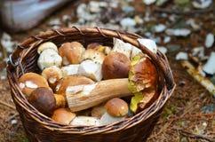 Korb voll von verschiedenen Pilzen Lizenzfreie Stockbilder
