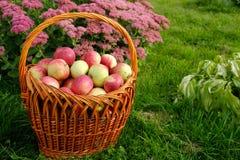 Korb von Äpfeln auf dem Grashintergrund Stockbild