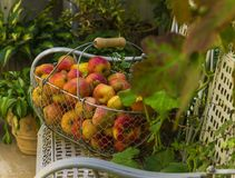 Korb von Äpfeln auf der weißen Bank stockfoto