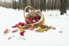 Korb von Äpfeln im Schnee Stockfotografie