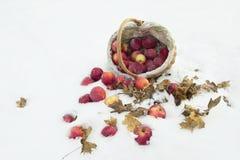 Korb von Äpfeln im Schnee Lizenzfreies Stockfoto