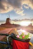 Korb von bunten Tulpen gegen niederländische Windmühlen in Zaanse Schans, Amsterdam, Holland Lizenzfreies Stockfoto