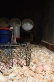 Korb von Eiern im Korb Lizenzfreie Stockfotografie