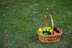 Korb von Früchten im Garten lizenzfreies stockfoto