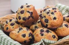 Korb von frisch gebackenen Muffins Lizenzfreie Stockbilder
