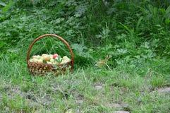 Korb von grünen Äpfeln ist im grünen Gras Lizenzfreies Stockfoto