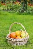 Korb von Kürbisen im Garten Lizenzfreie Stockfotografie