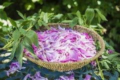 Korb von Pfingstrosenblumenblumenblättern Stockfotos