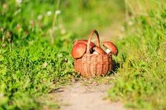 Korb von Pilzen im grünen Wald Lizenzfreie Stockfotos