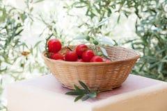 Korb von roten Tomaten mit olivgrünem Baumast Lizenzfreies Stockbild