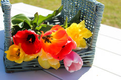 Korb von Tulpen Lizenzfreies Stockfoto