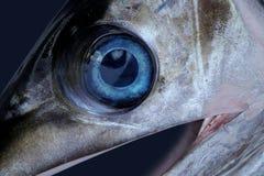 Kordzika rybi oko Fotografia Royalty Free