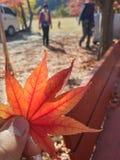 Koreańska jesień obrazy royalty free