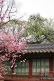 koreański pałacu Fotografia Royalty Free