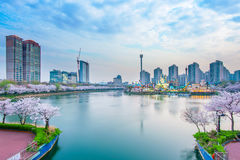 Korea cityscape with Lotte world and Cherry Blossom. Stock Image