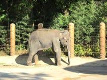 Korea Elephant. An Korea elephant in korea zoo image Stock Image
