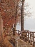Korea nami island. Romantic winter love song valentine royalty free stock photography