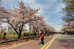 Koreańska wiosna Obraz Stock