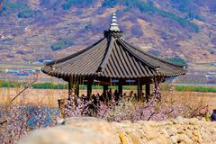Korean building with colorful cherry blossom during spring season in South Korea. stock photos