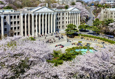 Korean campus Stock Photography