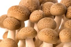 Korean Edible Mushrooms Macro Stock Photo