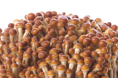 Korean Edible Mushrooms Macro Royalty Free Stock Photos