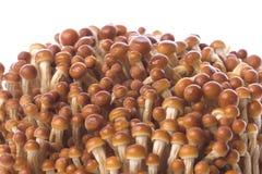 Korean Edible Mushrooms Macro Royalty Free Stock Photos