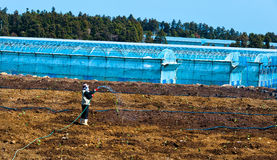 Korean farmer working  at greenhouse field Stock Images