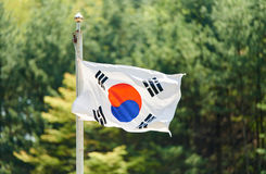 The Korean flag is fluttering in the forest Royalty Free Stock Photo