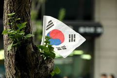 Korean flag on a tree. Is attached to decorate during Korean National Day stock photo