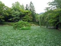 Korean Garden Royalty Free Stock Photo