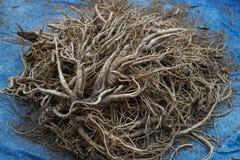 Korean ginseng Root Stock Photography