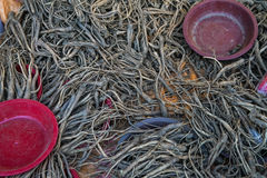 Korean ginseng Root Stock Photo
