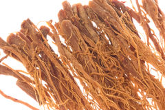 Korean Ginseng Roots Macro Isolated Stock Image