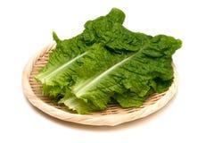 Korean Lettuce-Lactuca sativa Royalty Free Stock Photos